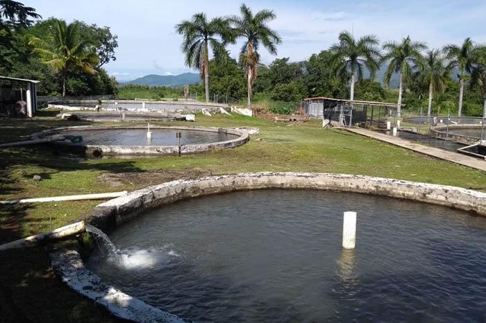buscarán detonar la pesca en Michoacán con un programa