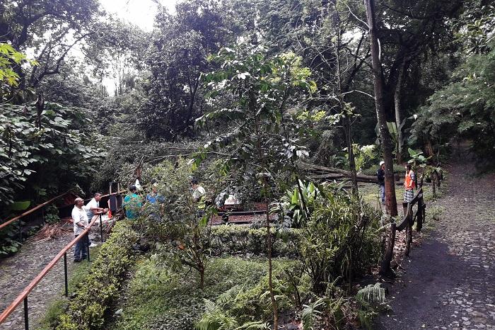 URUAPAN Árbol aplasta local en el Parque Nacional de Uruapan_ hay un herido (4)
