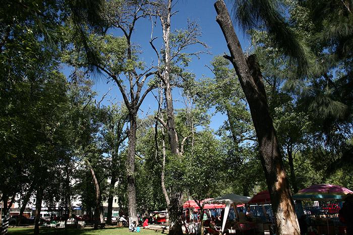 Autoridades aseguran que tienen más árboles identificados con riesgos de desplomarse