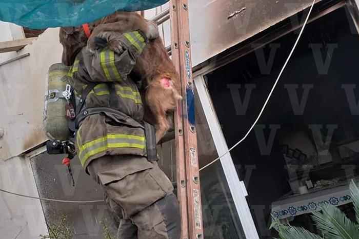 URUAPAN Bomberos Voluntarios apagan incendio y salvan a perro